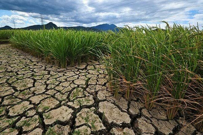 Thailand Economy Hit Hard by Drought